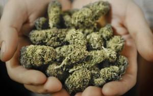 Medyczna marihuana – możesz uzyskać licencję, GrubyLoL.com