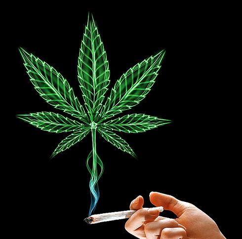 Plany Ograniczenia THC w Kolorado, GrubyLoL.com