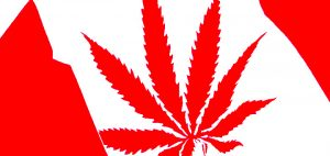 kanada-marihuana-flaga-kanady-marihuana-w-kanadzie-marihuana-na-swiecie
