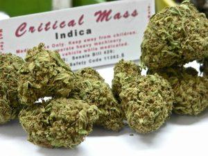 Podstawowy przewodnik po medycznej marihuanie, GrubyLoL.com