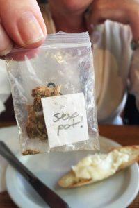Odmiana marihuany Sexxpot została zaprojektowana, aby pomóc kobietom, GrubyLoL.com