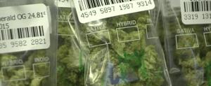 Badania dotyczące chemioterapii i marihuany, GrubyLoL.com