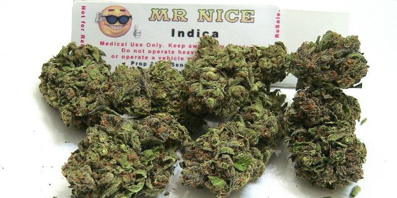 Recenzja odmiany Mr. Nice, GrubyLoL.com
