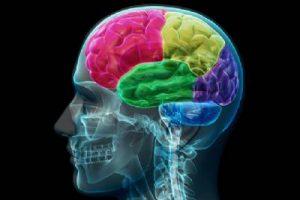 Ludzki mózg potrzebuje metafor, aby rozumieć rzeczywistość, GrubyLoL.com
