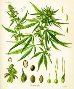 Program studiów w dziedzinie nauki marihuany, GrubyLoL.com