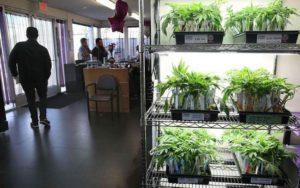 Berkley obniża stawkę podatku od marihuany, GrubyLoL.com