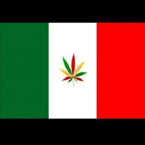 Legalizacja cannabis we Włoszech, GrubyLoL.com