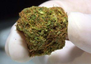 Cannabis pomaga także w przypadku hemoroidów, GrubyLoL.com