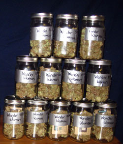 Znaczenie słupków w uprawie cannabis, GrubyLoL.com