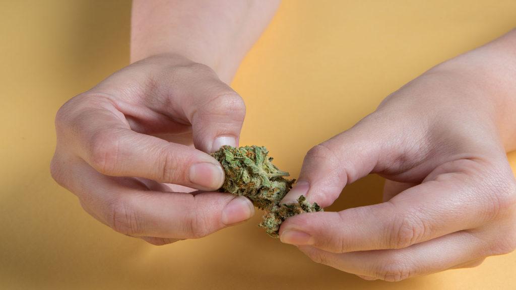 Francja robi pierwsze kroki w celu legalizacji marihuany, GrubyLoL.com