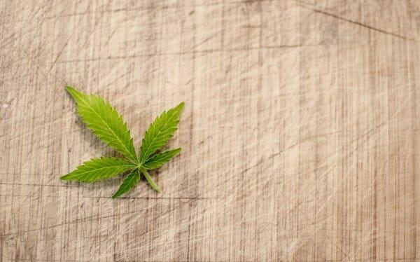 CBD i Mózg: Niesamowity Układ Endokannabinoidowy, GrubyLoL.com