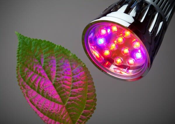 Czynniki Oświetlenia, Które Wpływają na Wzrost Roślin, GrubyLoL.com