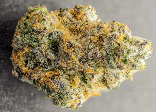 Czy Bezzapachowa Marihuana to Kolejny Trend w Świecie Cannabis?, GrubyLoL.com