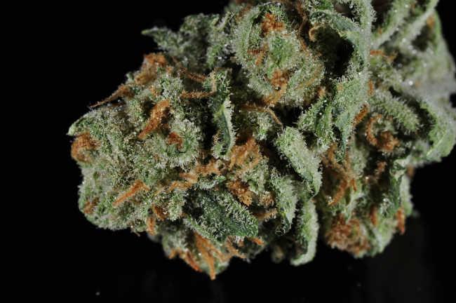 Jak Pozbyć Się Zapachu Marihuany z Domu, GrubyLoL.com