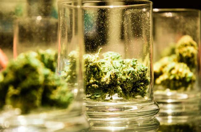 Stosowanie Marihuany w Leczeniu ALS, GrubyLoL.com