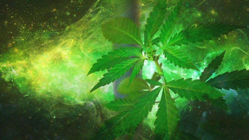 Prawie Połowa Pacjentów ze Stwardnieniem Rozsianym Używa Marihuany, GrubyLoL.com