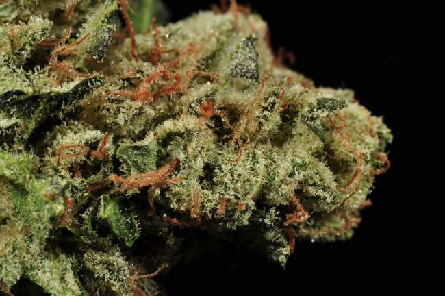 Czy Marihuana Pomaga w Utracie Wagi?, GrubyLoL.com