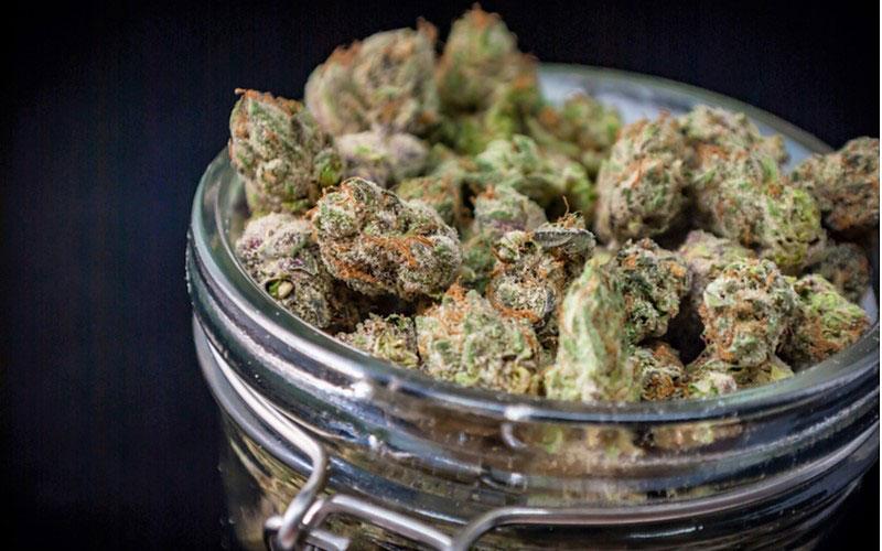 Używanie Cannabis Nie Powoduje Różnic w Sprawności Poznawczej, GrubyLoL.com