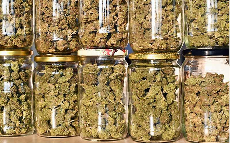 Stosowanie Opioidów Spada po Legalizacji Cannabis, GrubyLoL.com